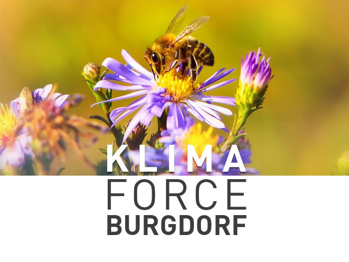 Bild Klima Force